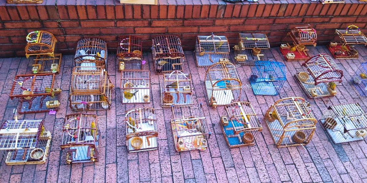 Maltrato animal: recuperan 32 canarios sometidos a concurso de canto en Fontibón