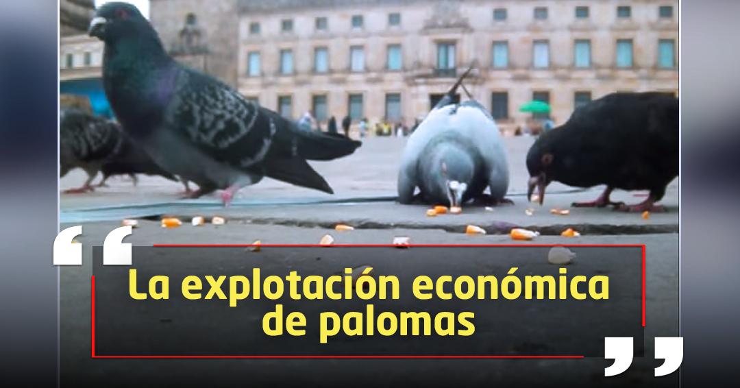 Distrito prohíbe venta de maíz para palomas en la Plaza de Bolívar