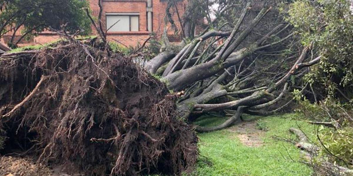 Más de mil árboles se han caído en Bogotá durante 2019