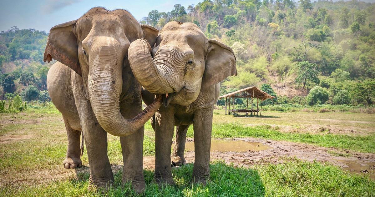 Queda prohibida la venta de elefantes para zoológicos y circos en todo el mundo