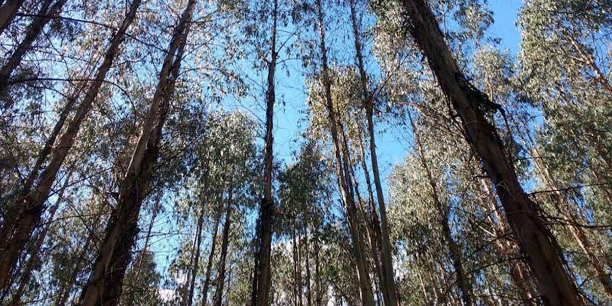 Adjudican un préstamo de 15 millones de dólares para reforestar al Urabá