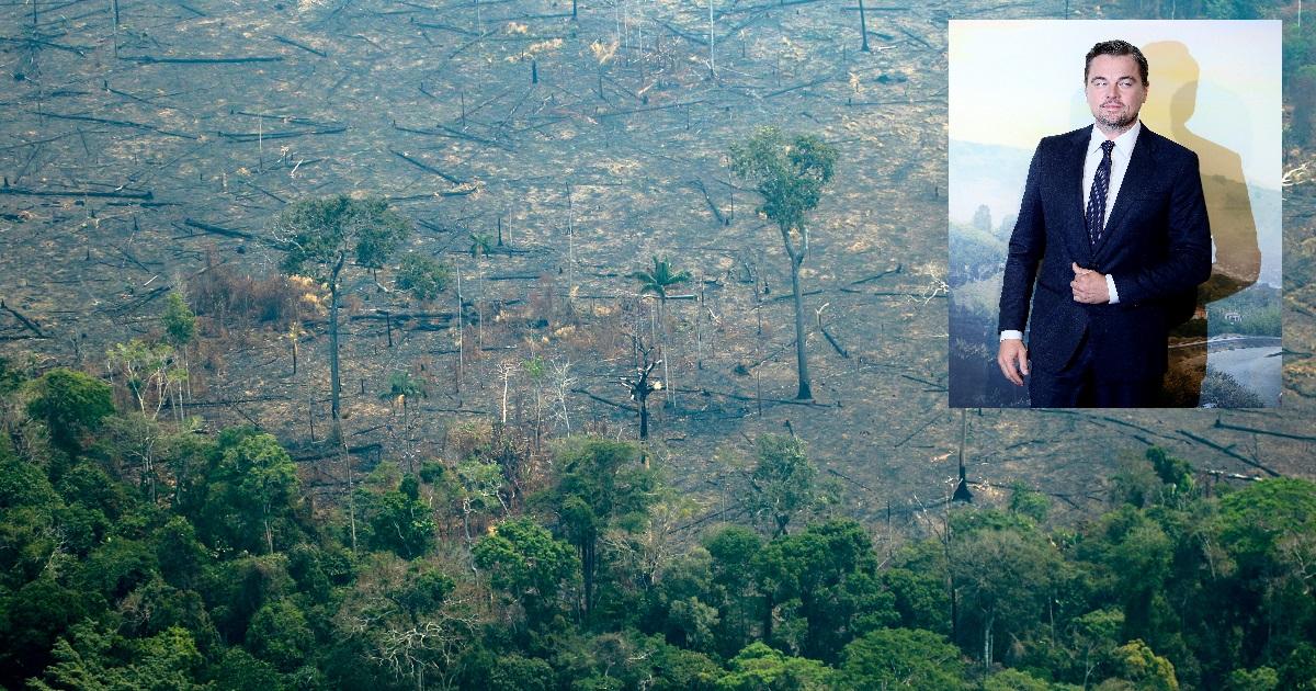 ¡Qué gran gesto! Leonardo DiCaprio donará multimillonaria suma para salvar la Amazonía