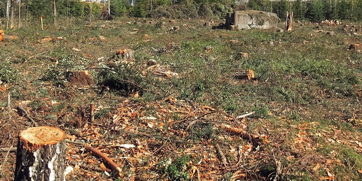 19 capturados por arrasar más de 10 mil hectáreas de bosque natural en Antioquia