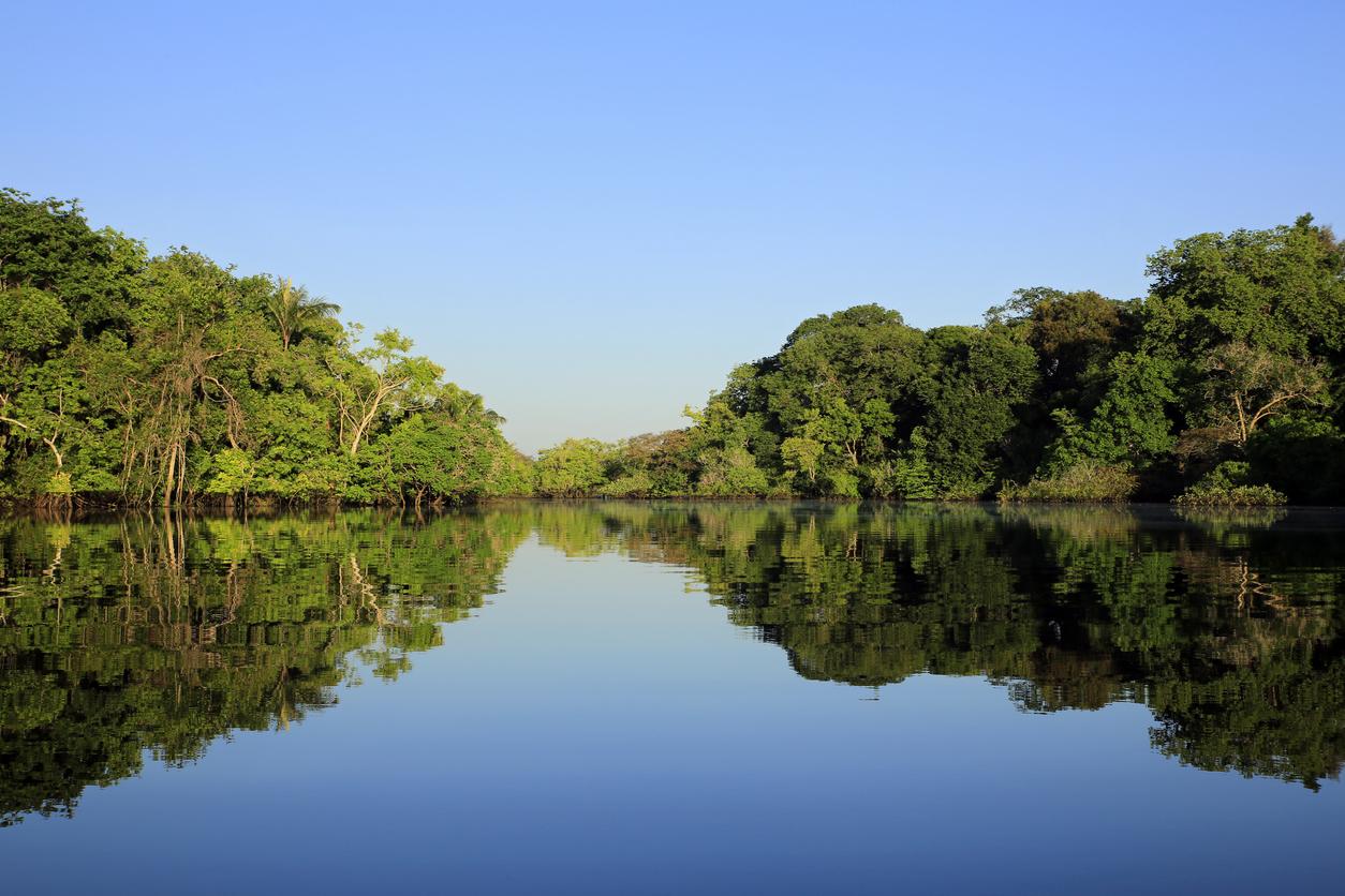 """¿Por qué decir que la Amazonia es """"el pulmón del mundo"""" es incorrecto?"""