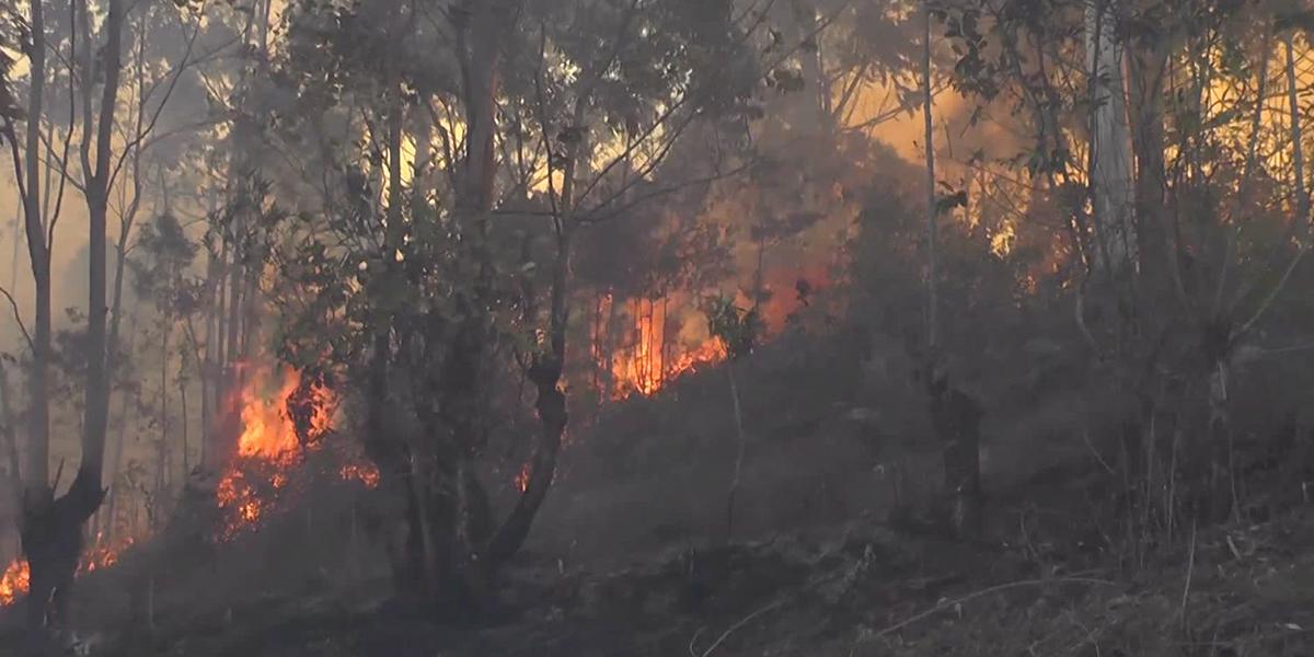 Los incendios no paran: 1.500 hectáreas de bosque han sido consumidas en el sur de Cauca