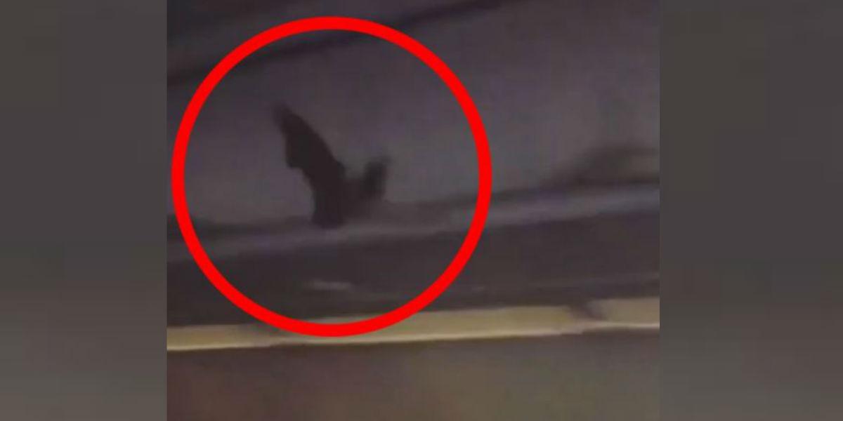 Un murciélago generó terror a pasajeros de un avión a mitad del vuelo