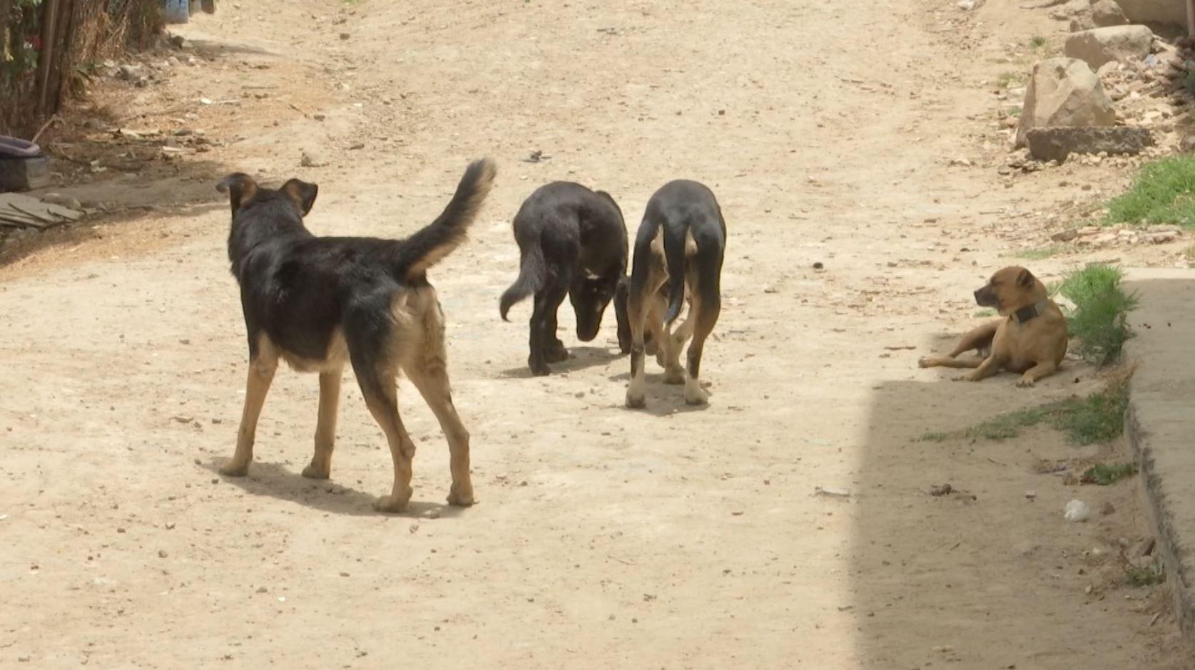 Denuncian a hombre vendía crías de perro para usarlas como carnada para perros de pelea