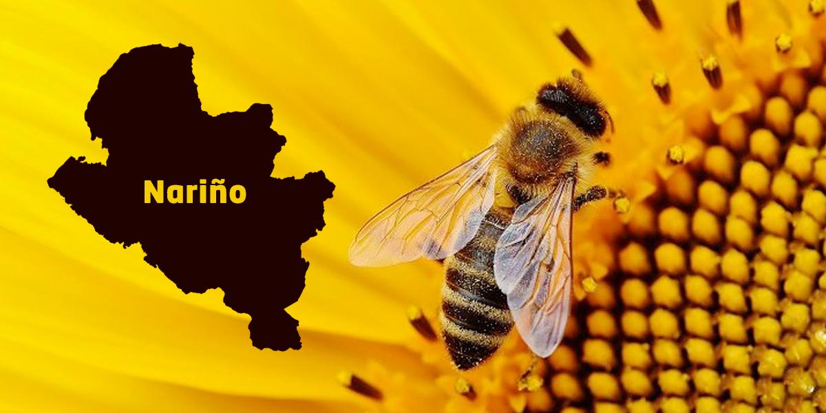 Nariño, primer departamento en proteger a las abejas