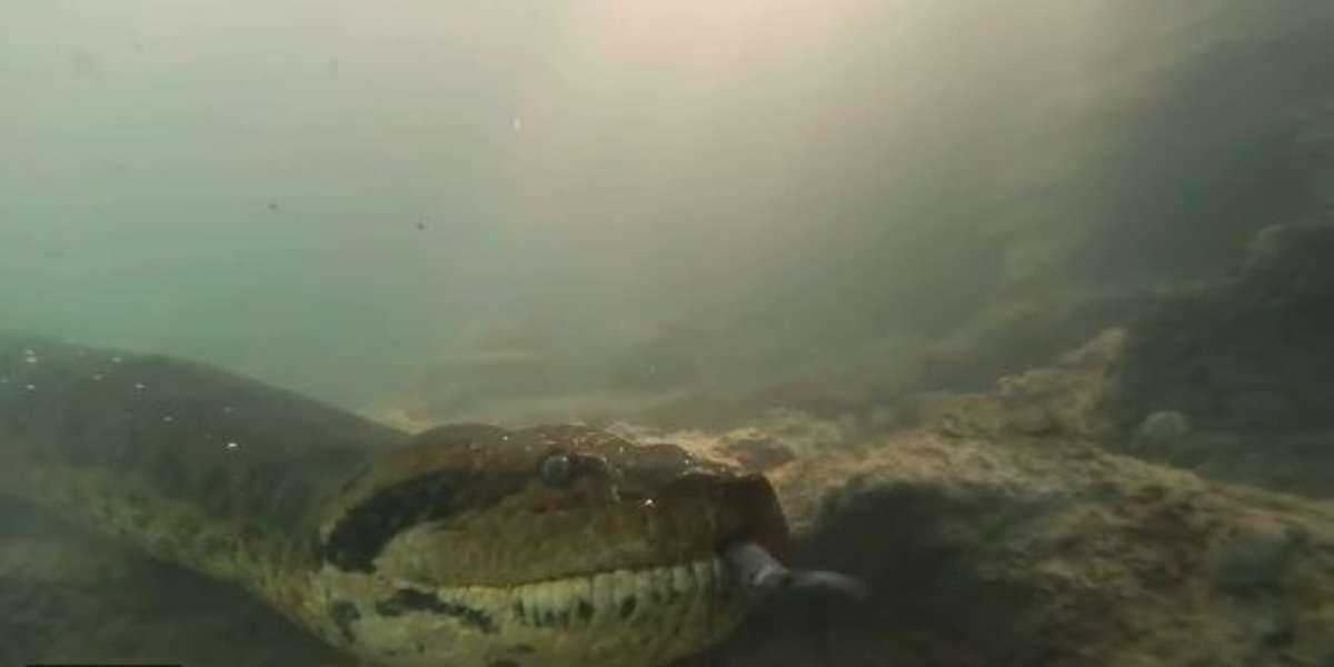El video del sorprendente encuentro entre 2 buzos y una gigantesca anaconda de 7 metros