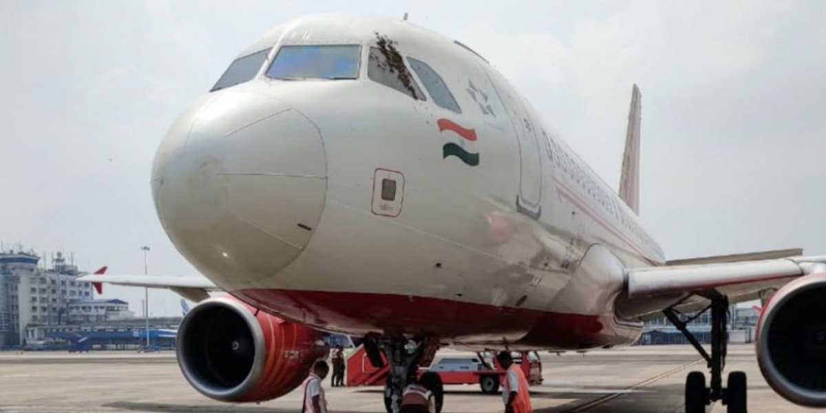 Enjambre de abejas provocó retraso de casi 4 horas en vuelo comercial de India