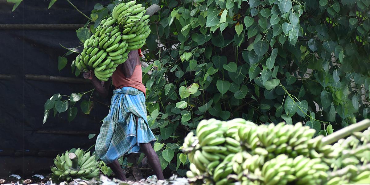 Nuevo acuerdo evita huelga de trabajadores bananeros en Urabá