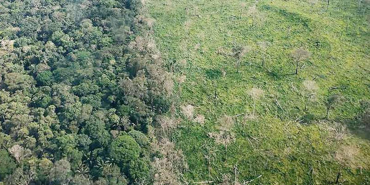 Los bosques de Guaviare están en peligro por la deforestación