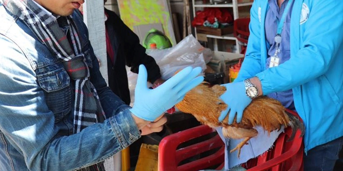 Adulto mayor habría abusado de tres gallinas en el barrio 7 de Agosto de Bogotá
