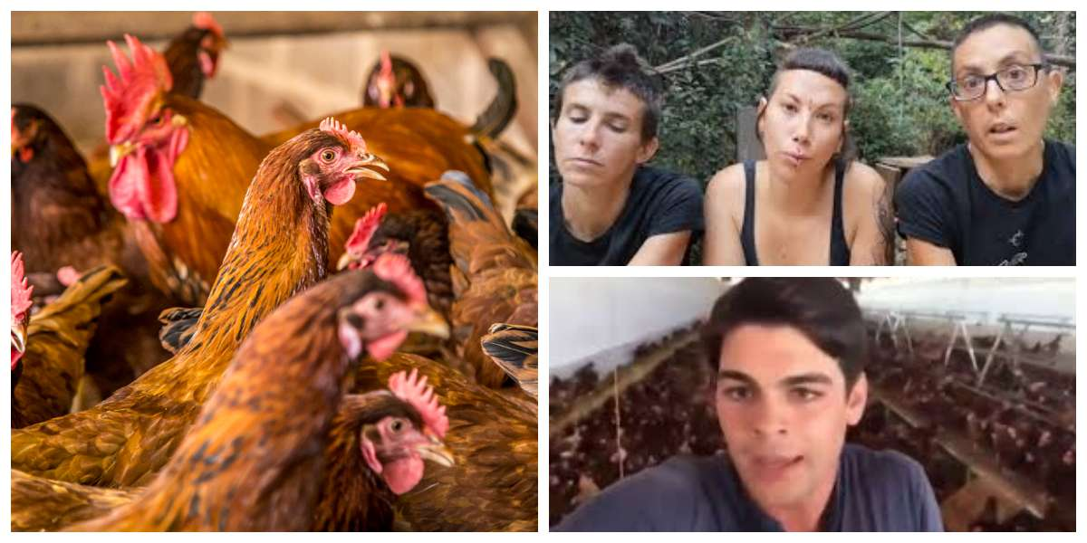 Avicultor les responde a veganas que invitaban a no comer huevo porque las gallinas son violadas