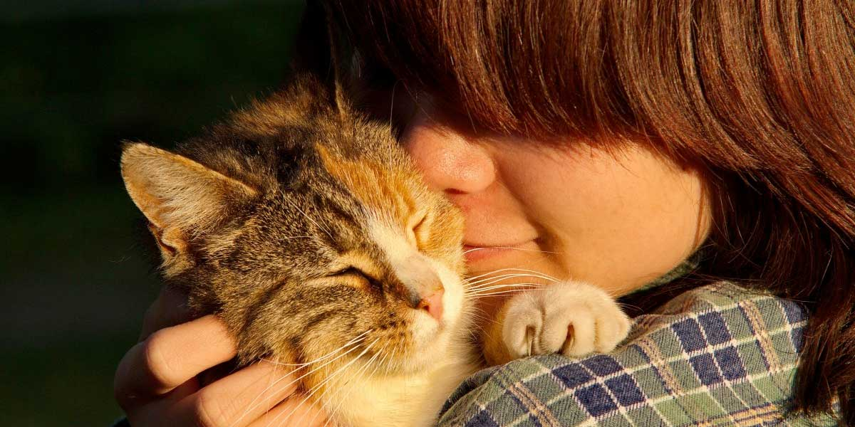 Estudio confirma que los gatos son tan apegados a sus cuidadores como los niños y perros