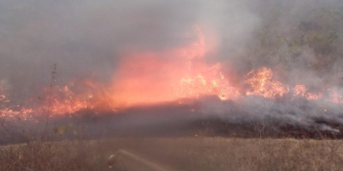 Más de 3.000 hectáreas se han quemado por incendios forestales en Neiva