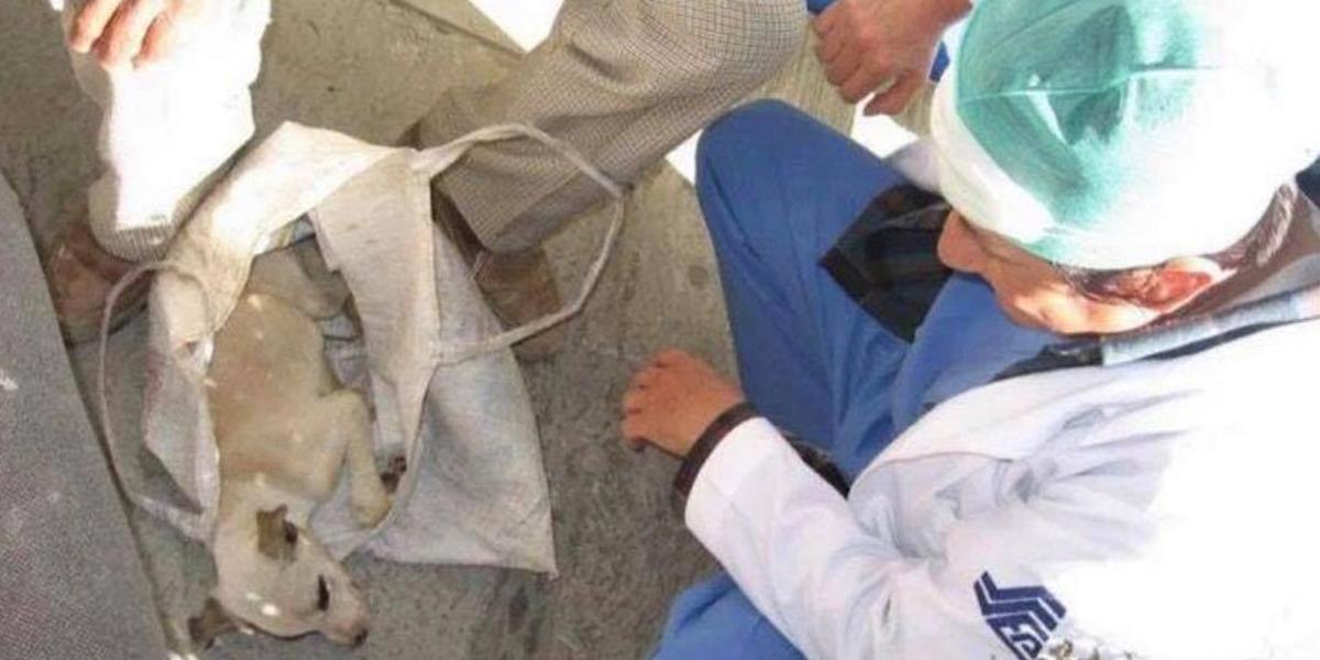 Anciano llevó a su perro enfermo a un hospital humano y los médicos le salvaron la vida