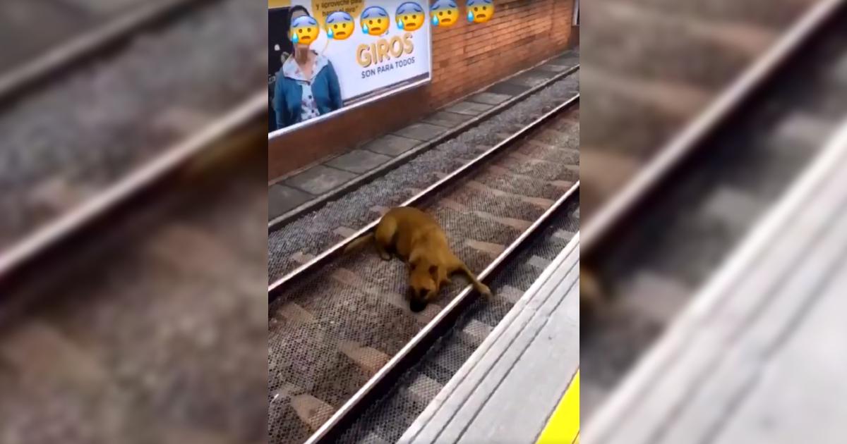 'No dan gracia sus bromas de mal gusto': Metro de Medellín por video de perro 'atropellado'
