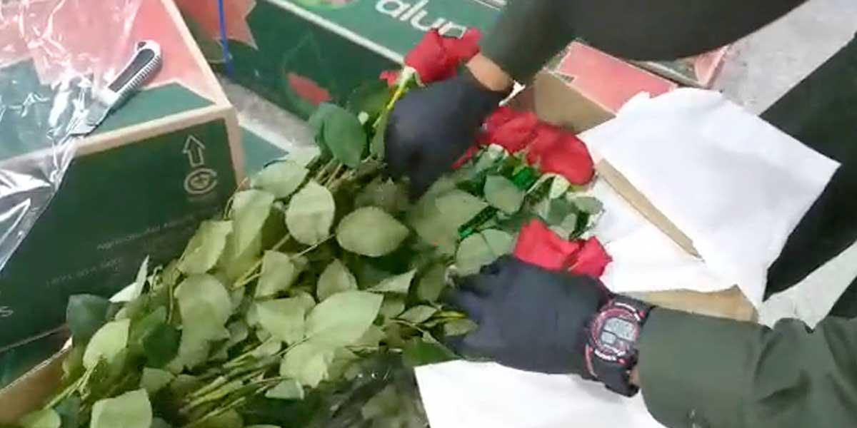 En los tallos de las flores, narcotraficantes buscan sacar cocaína hacia Asia