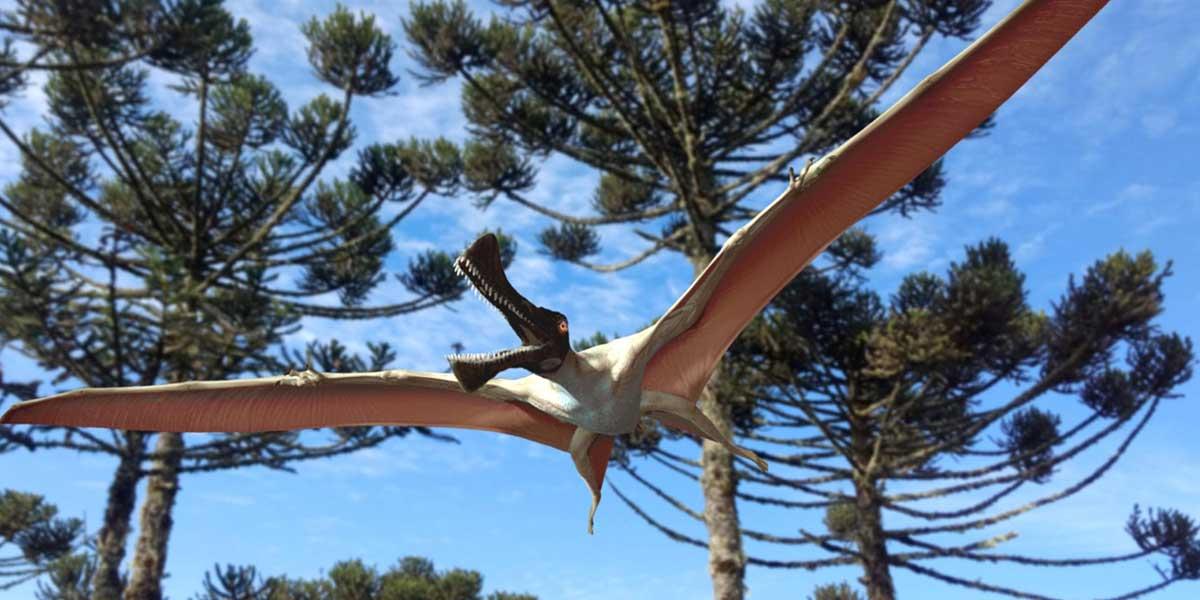 Hallan en Australia los restos de un gigante reptil prehistórico volador