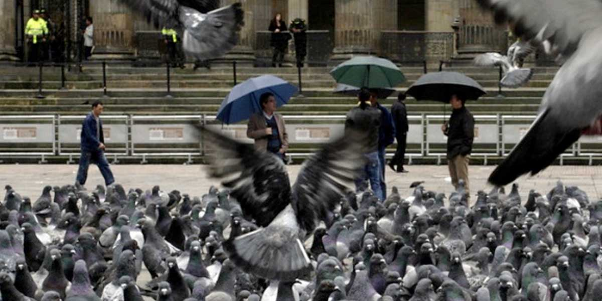 La Plaza de Bolívar de Bogotá tiene menos palomas y son buenas noticias para ambos