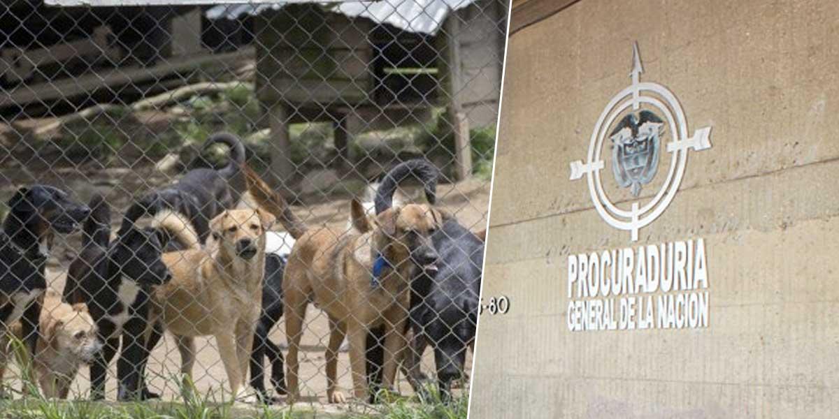 Ordenan construcción de albergue para proteger a gatos y perros en Dosquebradas, Risaralda