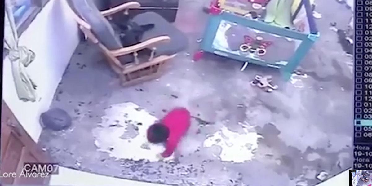 Increíble: una gata salva a un bebé de rodar escaleras abajo en Bogotá