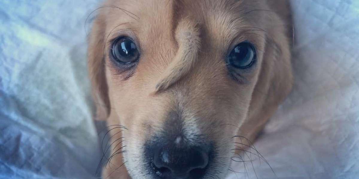 La hermosa historia del perrito que nació con una cola en su cabeza