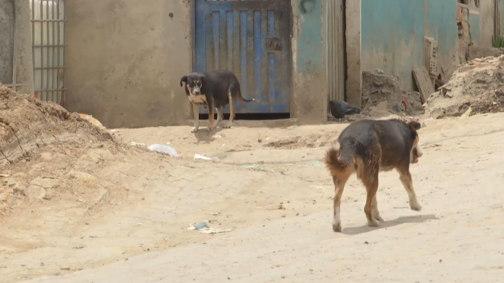 ¿Sabe qué hacer si se encuentra a un canino o a un felino maltratado en calle?