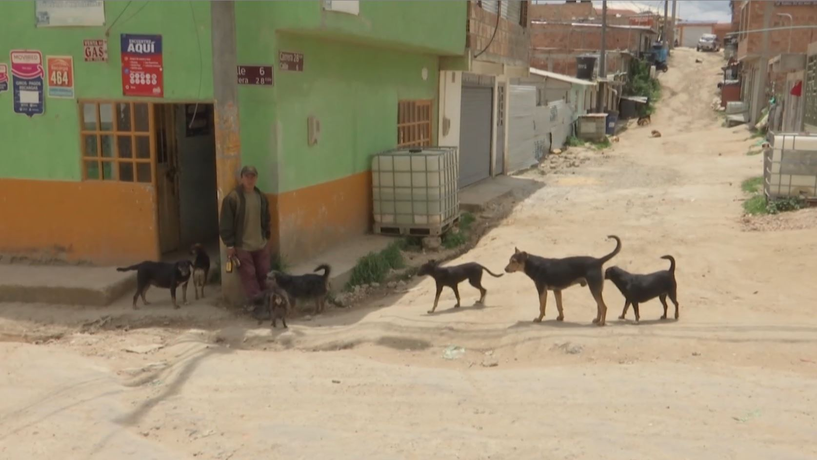 Machetazos, abuso sexual y empalamiento son las principales agresiones a animales en Soacha