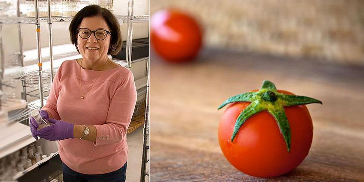 La científica colombiana que diseña tomates minúsculos para la NASA
