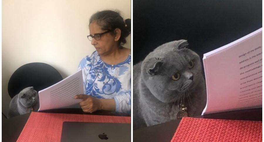 """""""¿Por qué pusiste?"""", los mejores memes del gato sorprendido y cuál es su origen"""