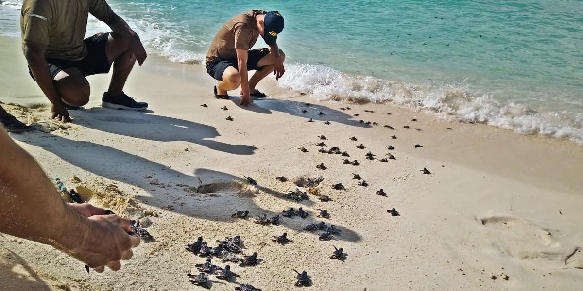 Armada de Colombia ha liberado 3.647 tortugas durante el 2019 en la región Insular